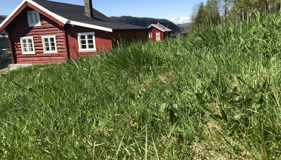<strong>FRED OG IDYLL PÅ SKRINDO:</strong> Et lite småbruk, grønt gress og nydelig natur gir påfyll til en stressa sjel. FOTO: Sonja Evelyn Nordanger