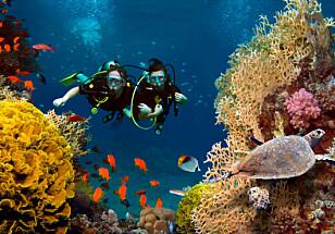 Livet under vann er spektakulært, oppdaget vår journalist Aase Dotterud. Foto: NTB Scanpix