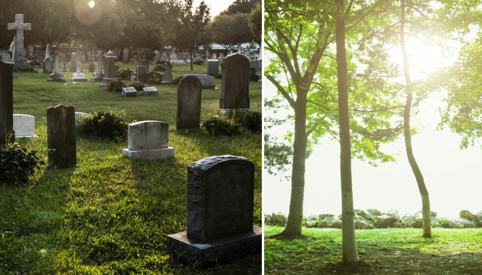 FREMTIDENS GRAVPLASSER: En skog kan bli fremtidens gravplass. Foto: Shutterstock