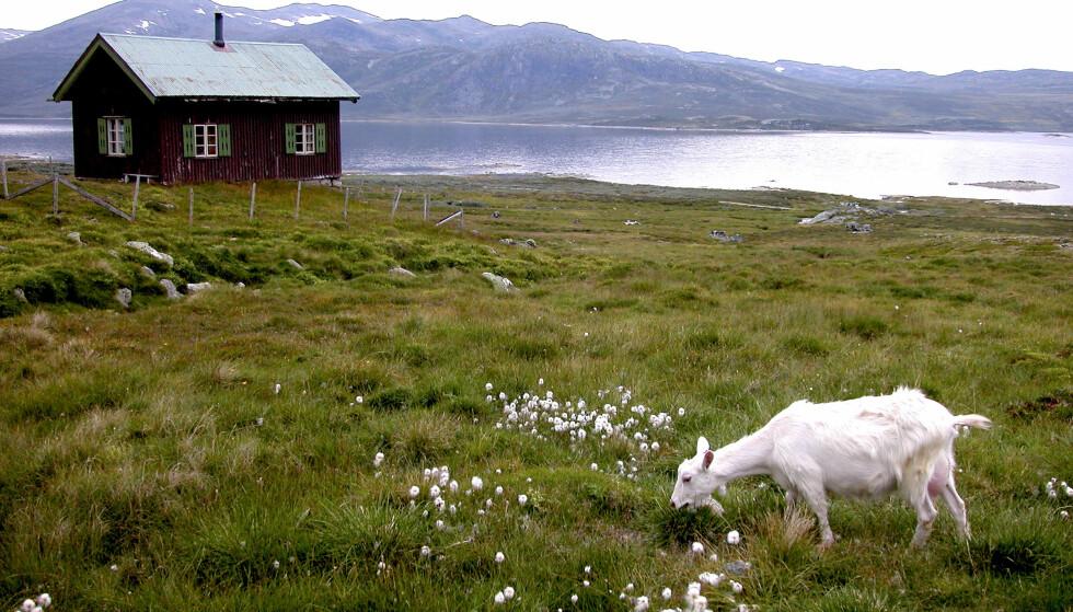 FJELLDRØMMEN: Mange åremålshytter ligger i skogen eller på fjellet. Her fra Hemsedal. Foto: Berit Keilen