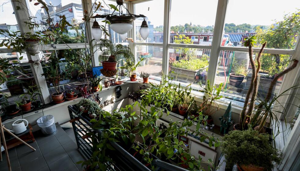 FORVANDLING: Da Kjell og Christian kjøpte leiligheten, var det bare et flatt tak på toppen. I løpet av 25 år har de delt leiligheten inn i ulike etasjer, der den siste trappen leder opp til et glasshus som igjen leder ut på terrassehagen. FOTO: Lise Åserud / NTB scanpix