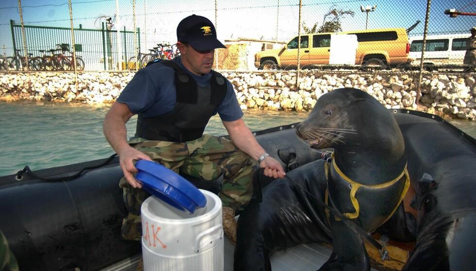SEL PÅ VAKT: Det er ikke lenge siden det amerikanske forsvaret brukte sel til å holde vakt under vann. Foto: AFP Photo/ US Navy