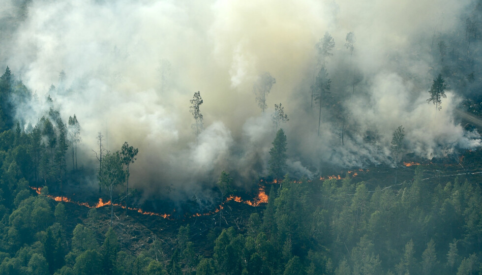 SVENSKE SKOGBRANNER: Rekordvarme i sommer førte til skogbranner i Sverige. Her fra Ljusdal 18. juli, 30 mil utenfor Stockholm. Foto: Maja Suslin / TT / NTB scanpix