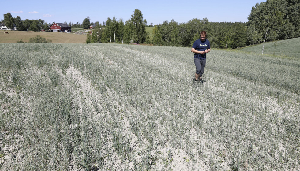 <strong>TØRKE:</strong> Kornavlingen er kjørt, og Bonde Lars Halvor Stokstad fikk under halvparten av normal avling i år. Foto: Gorm Kallestad / NTB scanpix