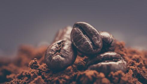 KVERN RIKTIG: Kaffebønnene skal kvernes grovt til svart kaffe. Foto: NTB Scanpix