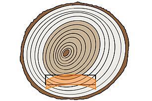 Krumming: En furustokk består av marg innerst, så kjerneved, yteved og bark ytterst. Et terrassebord vil krumme seg ned på sidene om du legger det med margsiden opp. Illustrasjon: Øivind Lie-Jacobsen
