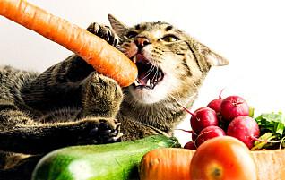 Dette må du passe på hvis katten eller hunden skal spise vegetarmat