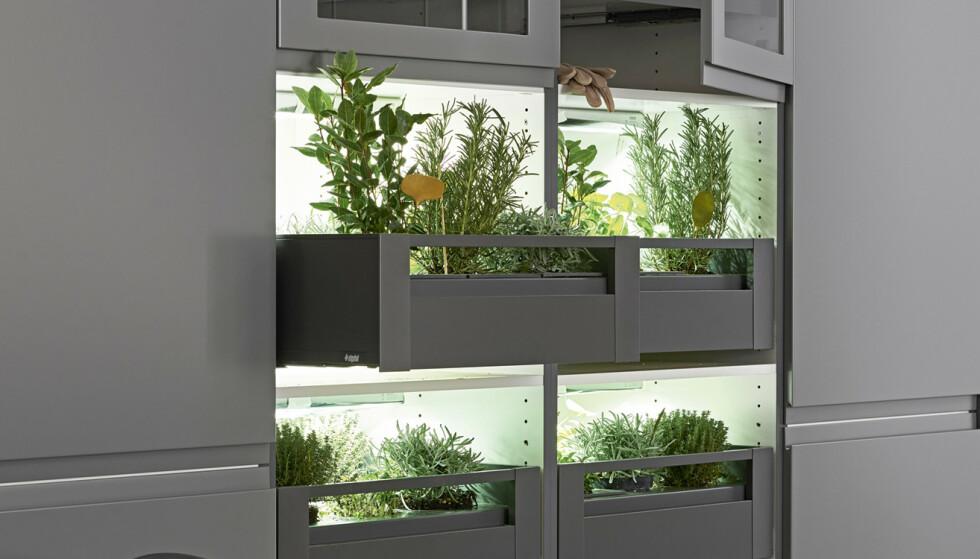 Urtehage: Er du storforbruker av urter kan en kjøkkenhage i skuffene være tingen. Foto: Produsenten