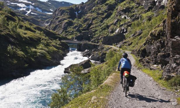 POPULÆR: Naturskjønne Rallarvegen er Norges mest populære sykkeltur. Rundt 25.000 syklister legger ut på den 80 km lange strekningen hvert år. FOTO: Shutterstock / NTB Scanpix FOTO: