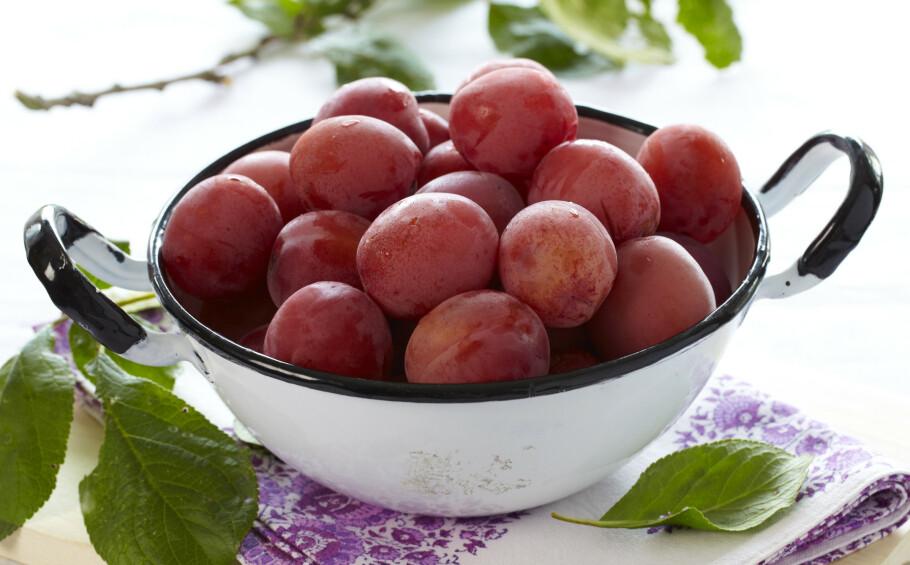 Er du heldig å eie et plommetre, har du gjerne oppdaget at årets avling er stor. Del frukten med andre, bak en kake eller kok syltetøy. Foto: Synøve Dreyer