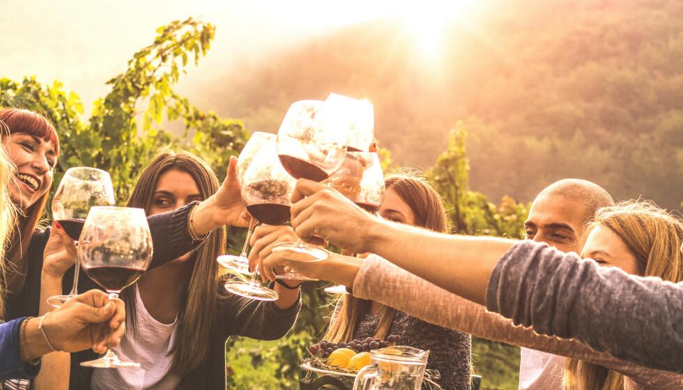 Noen viner smaker så mye at de stjeler showet fra maten, andre ganger er det omvendt. Målet er å sette sammen vin og mat som lar hverandre skinne. Foto: Scanpix/Shutterstock