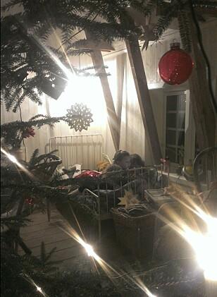 VÅR JUL: Tre unger foran én bok i samme seng på vår gamle, isolerte låve, sett gjennom selvhogget juletre. For meg er dette bildet av fullstendig julero. Foto: Birgitte Hoff Lysholm