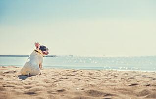Frykter heteslag og brente poter - disse hundene er mest utsatt