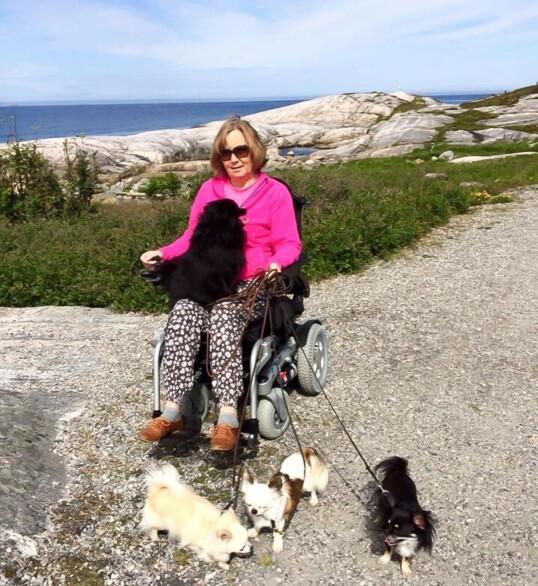 I halvannet år var Venke rullestolbruker. Hun hadde mer enn nok med å stelle seg selv, men hundene måtte luftes. Foto: Privat