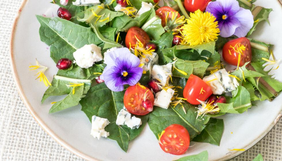 Grønn salat med blader og blomster av løvetann, tomat, blåmuggost, granateple og fiol. Vakkert og godt! Foto: Shutterstock/NTB Scanpix