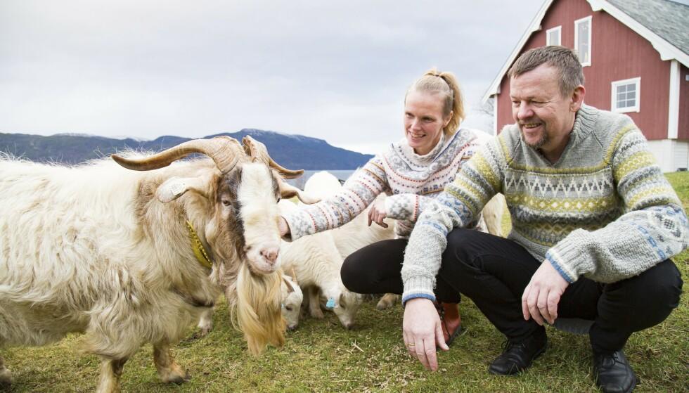 Mange dyr: Et av de mange dyrene på gården er denne boergeiten. – Den er veldig kosete, sier Berit og Karl, som har laget besøksgård på Blakstad. De har 120 dyr. Foto: Siv-Elin Nærø