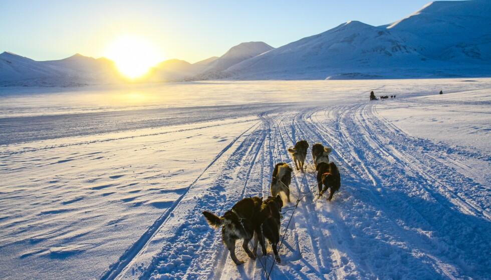 Hundekjøring er en av de beste måtene å oppleve Svalbard. Foto: Runar Larsen