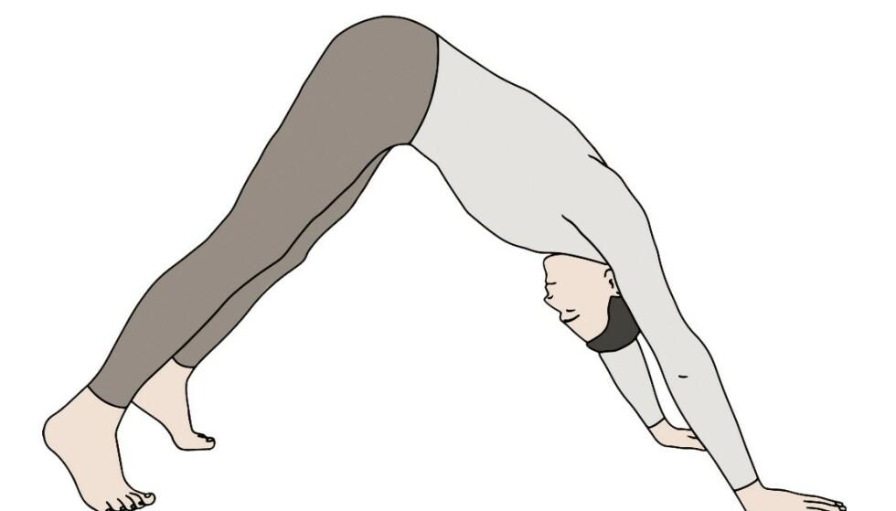 RITE 5: Vend deg rundt og vipp bekkenet ned mot gulvet, mens overkropp og hode holdes opp og bakover. Ha bøyde tær og håndflatene i gulvet. La det være ca. en skulderbreddes avstand både mellom føttene og mellom hendene. Vipp rumpe og bekken opp på innpust. Hodet skal peke ned, og beina skal være strake. På utpust går du tilbake til utgangsstillingen.