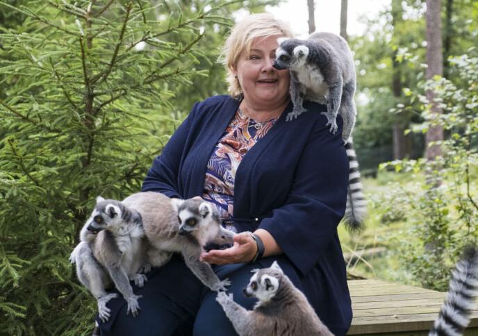 Dyreparken i Kristiansand er kanskje fortsatt aller mest kjent for apen Julius, men byr på mye, mye mer. Her er det statsminister Erna Solberg som får nærkontakt med en flokk lemurer i 2017. Foto: Tor Erik Schrøder/NTB