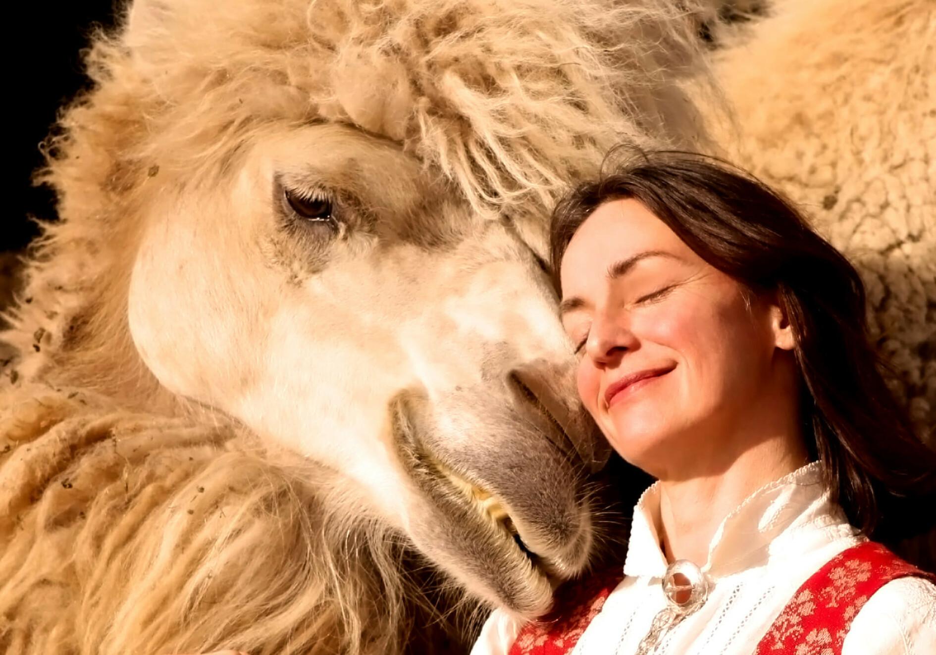 OVERNATT MED KAMELER - I FINNMARK: Oddveig Sætereng og familien tilbyr overnatting med ganske spesielle opplevelser: Å bli kjent med kamelene Bor, Bestla og Vilje. Foto: Privat