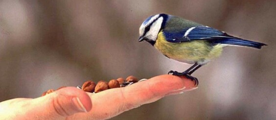 Image: Slik gir du riktig fugleomsorg i vinterkulda