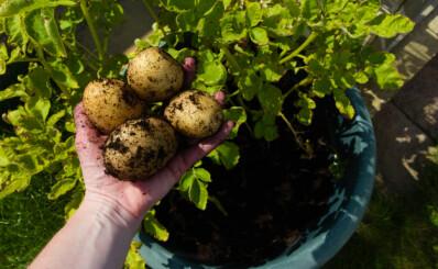 Image: Advarer mot plantetrend