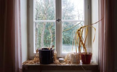 Image: Dette skal du aldri gjøre med planter som dør