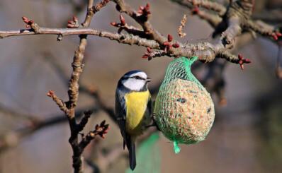 Image: - Hører ikke hjemme blant fuglene